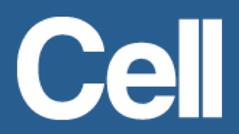 Cell-logo